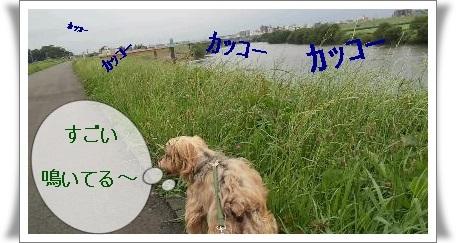 rps20130624_102312_780.jpg