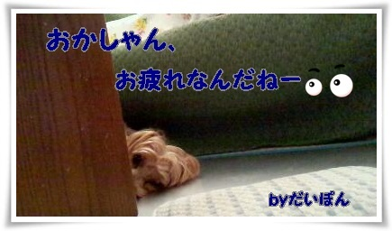 rps20130819_114026_758.jpg